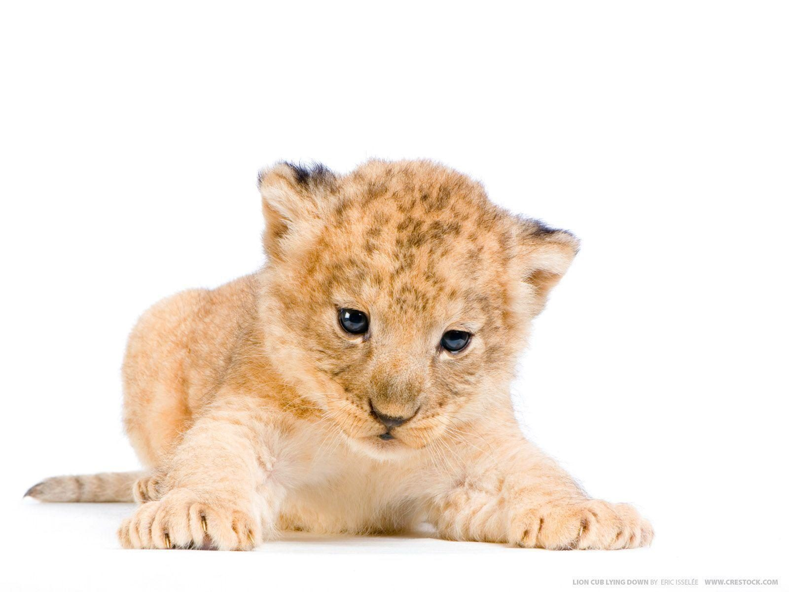 Lion Cubs 2020
